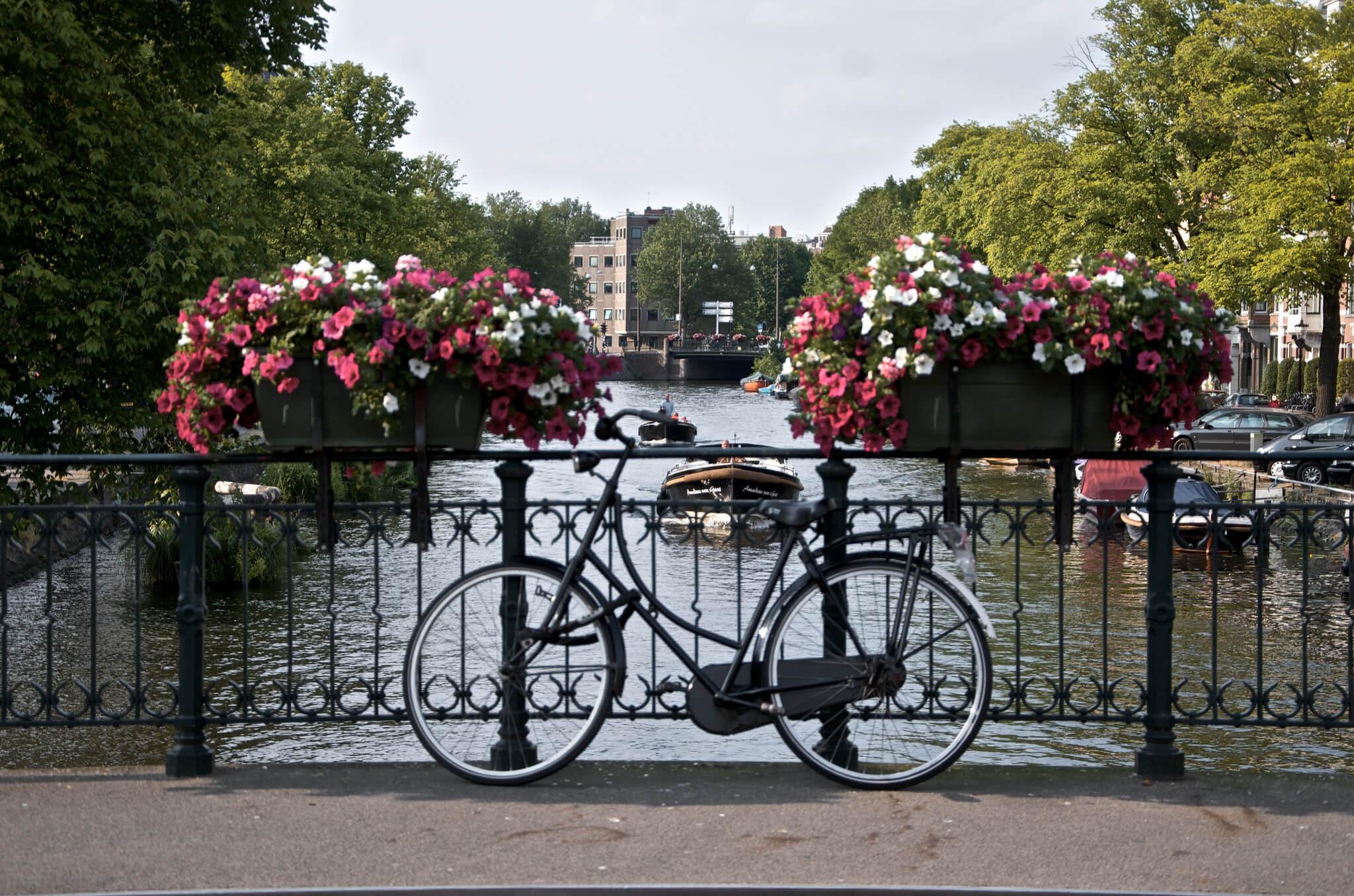 Cycle Amsterdam like a local