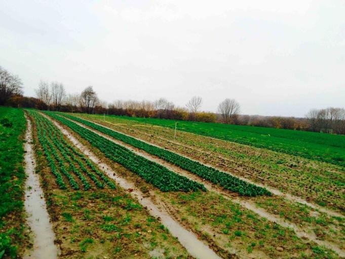 Fields at the Kattendorfer Hof.
